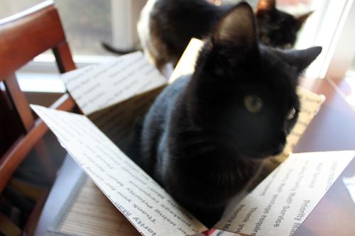 teal cat ocd kittens